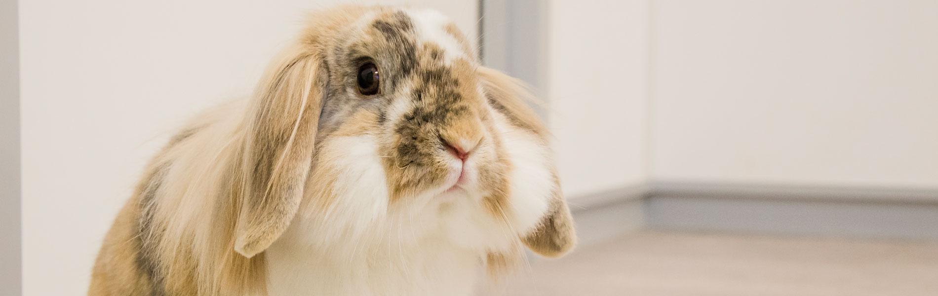 Instructie dwangvoeren bij konijnen en cavia's