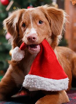 Openingstijden Nanda dierenarts feestdagen